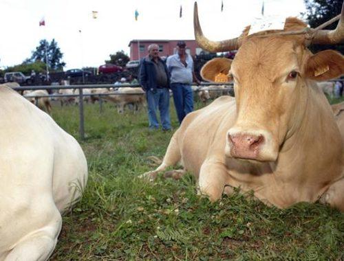 Un estudio científico avala la calidad de la carne palmera frente a la foránea. AVAPAL
